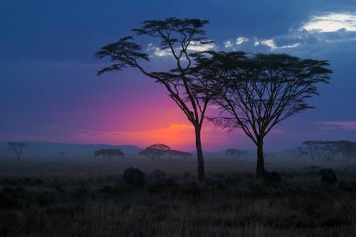 31.05.12-Serengeti